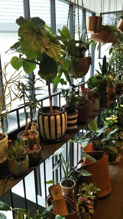 BIOTOP 観葉植物